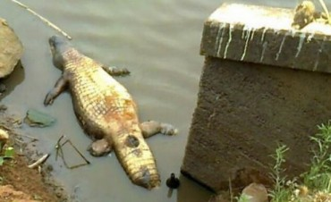 Mortandad de peces en una represa que experimentó pronunciada bajante