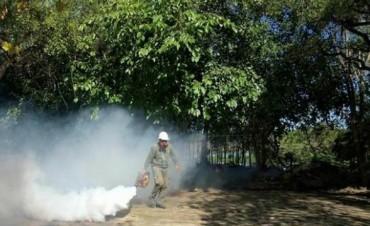 """""""Podríamos tener un pico de casos no sólo de dengue, también de zica y chikungunya"""""""