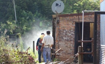 Confirman que el vector del dengue está en Santo Tomé.