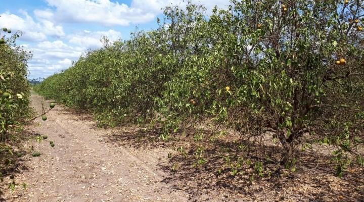 Más de 600 productores citrícolas afectados por la sequía