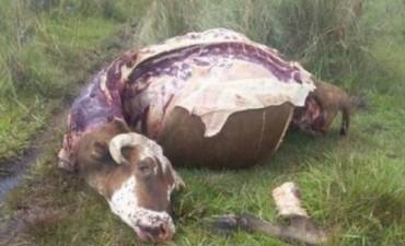 Carnearon 6 animales en un campo de Santo Tomé