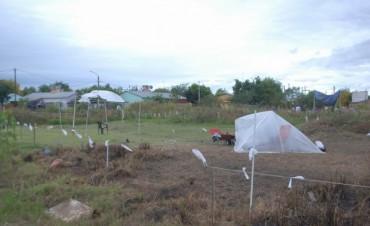 Sigue la ocupación ilegal en el San Roque Este y se suman familias