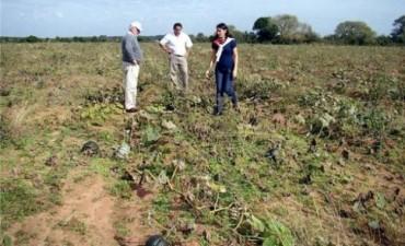 Conflicto en San Miguel por la pérdida total de cosecha