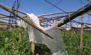 Horticultura: siguen relevando daños pero ya elevarán un informe preliminar a Nación