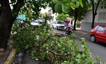 Fuerte tormenta provocó la caída de postes y dejó a varios barrios sin luz