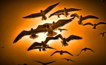 De halcones y palomas