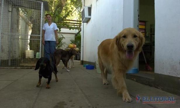 Hotel para perros: en enero el alojamiento está agotado por la cantidad de mascotas