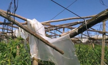 Nación giró fondos para asistir a los horticultores que fueron damnificados por un tornado
