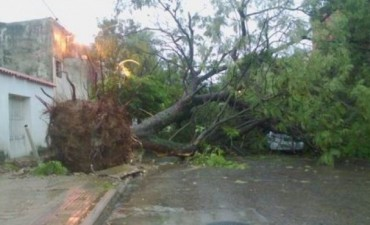 Tormenta: por fuertes ráfagas de viento cayeron más de 25 árboles
