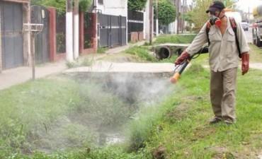 Corrientes, la segunda provincia que más casos de leishmaniasis reportó