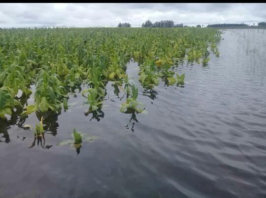 Sectores productivos reportan las pérdidas por inundaciones