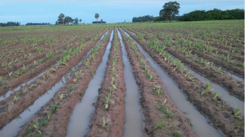 Asistencia a los pequeños productores, los más afectados por la emergencia