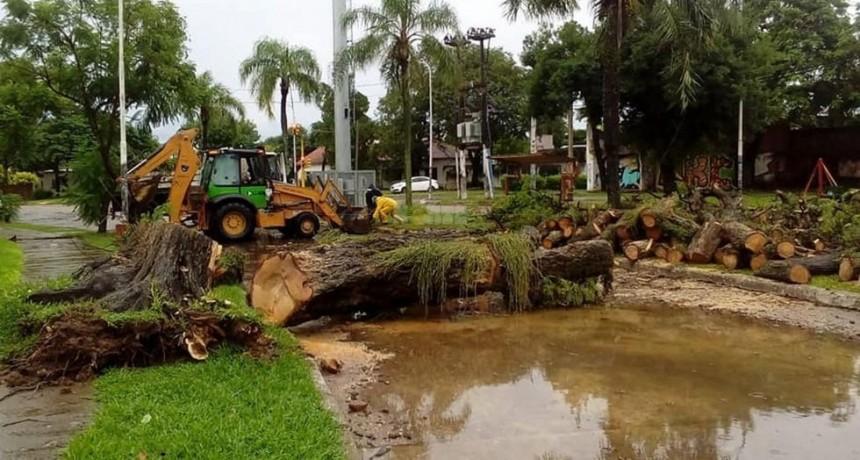 Hubo calles anegadas, árboles caídos y cables cortados por la intensa tormenta