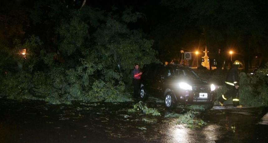 Fuerte temporal inundó la ciudad en poco tiempo y cayeron varios árboles