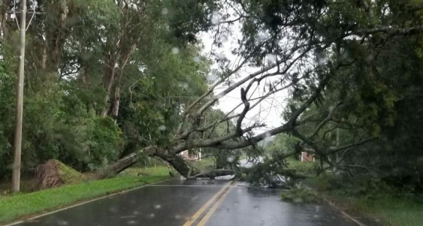 Esta es la situación de las rutas de la provincia por el temporal