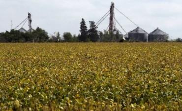 Las cerealeras estimaron que este año habrá ventas por u$s29 mil millones