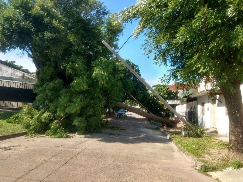 La tormenta derribó 45 árboles y en un mes y medio suman más de un centenar