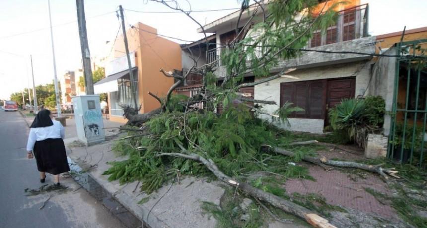 La tormenta del sábado dejó un saldo de más 70 postes y 30 arboles caídos