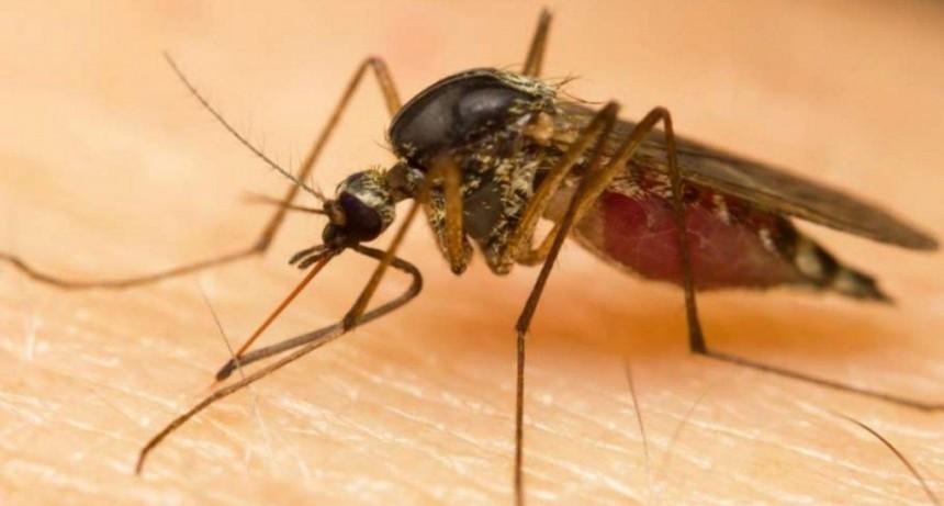 Aguardan a un laboratorio para saber si hay otro caso de dengue autóctono