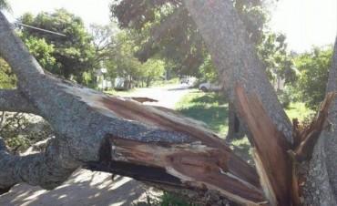 Fuertes vientos azotaron varias localidades sin provocar daños graves