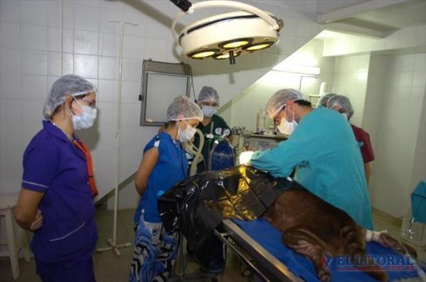 El Hospital Escuela de Veterinaria de la Unne recibe unas 4 mil consultas por año