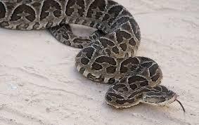 Preocupación en Goya ante la aparición de serpientes venenosas por la creciente