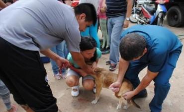 Aprobaron una ley que prohíbe el sacrificio y protege a los animales