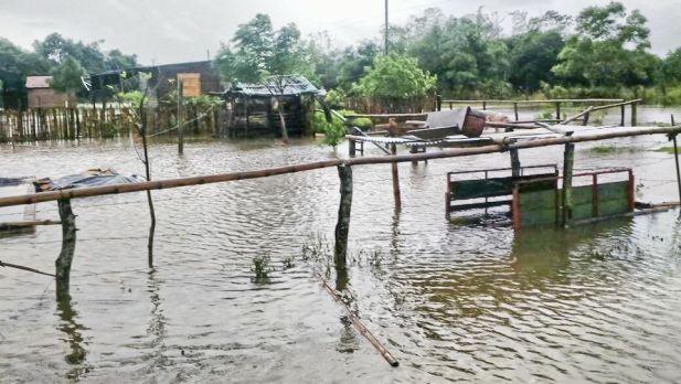 Las siembras quedaron perdidas y el ganado, en riesgo por las lluvias