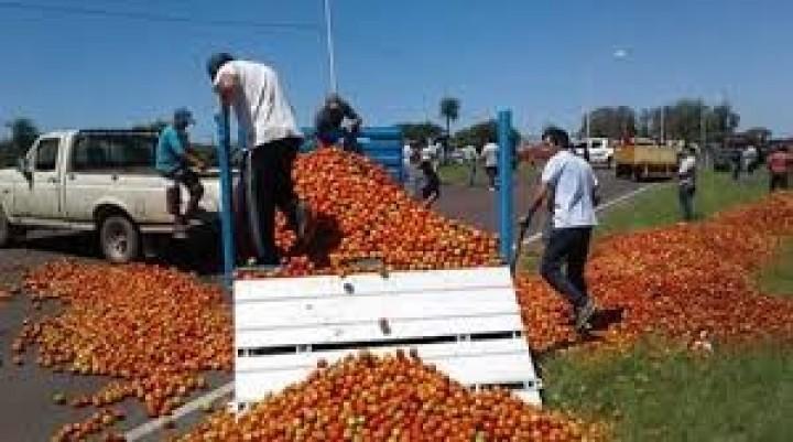 Alerta en el sector hortícola: ante la falta de demanda tuvieron que tirar tomates