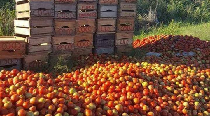 Apuntan a paliar la crisis del sector hortícola por la saturación del mercado
