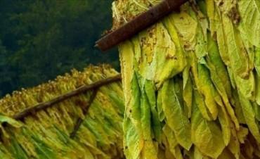 Aguardan $10 millones para los productores tabacaleros