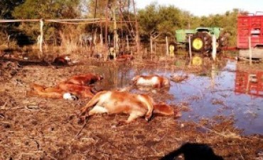 Corrientes, en Emergencia Agropecuaria