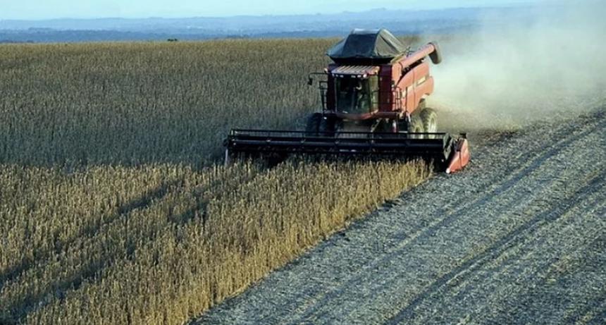 Las ganancias de los productores de maíz aumentaron 216% en dólares en un año