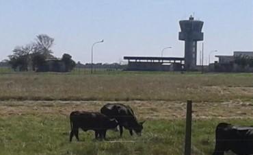 Aeropuerto, obrador y campo de pastaje