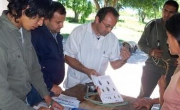 Chagas: realizarán testeos gratuitos en una semana dedicada a la prevención