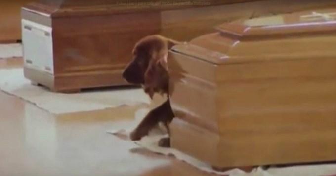 Inseparables: Perrito despide a su dueño muerto en el temblor