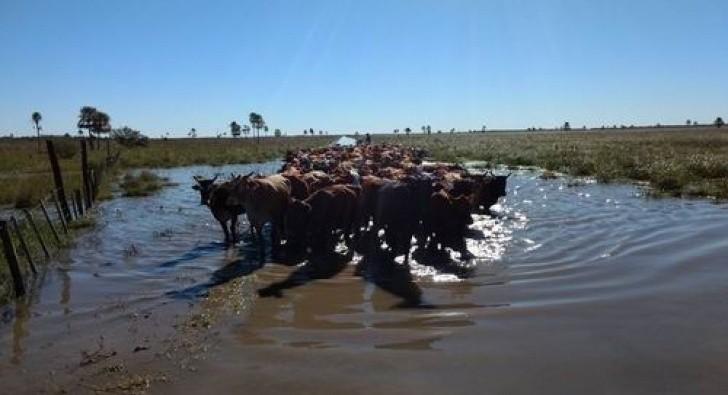 Por la demora de fondos, Provincia hace malabares para asistir a productores