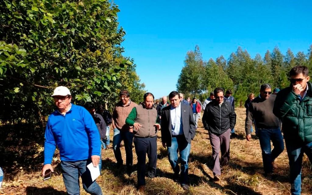 Estiman que la actividad forestoindustrial en la provincia cayó 7,2 % de marzo a agosto