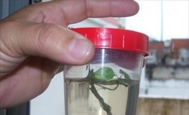 Científicos de todo el país llegan a la Unne para analizar enfermedades por mosquitos