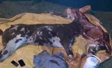 Santo Tomé: dos hombres aprehendidos con carne faenada de manera clandestina