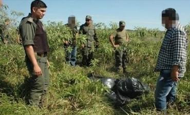 Incautan en campos de Itatí casi 400 kilos de marihuana ocultos entre las malezas.