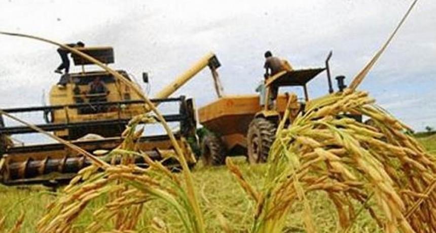 Productores correntinos aseguran que se acentúa la crisis en el sector arrocero