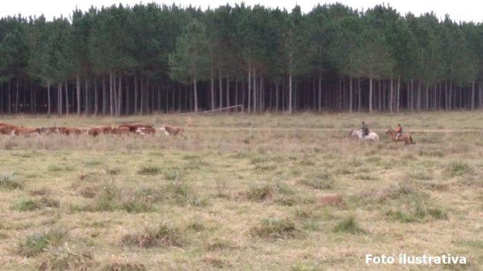 Peón rural murió alcanzado por un rayo cuando arreaba el ganado