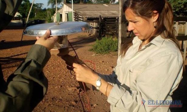 Lehismaniasis: desmonte en Santa Catalina pudo influir en la proliferación del mosquito