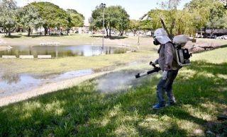 Dengue: fumigan en espacios públicos para erradicar la presencia del mosquito