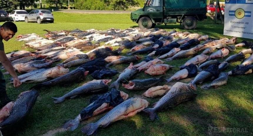 Paso de la Patria: incautaron camión con cerca de 6 mil kilos de surub