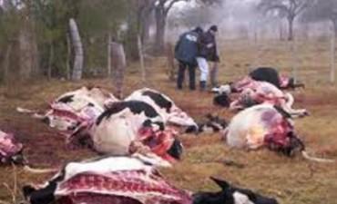 Detienen a otro policía por robo de ganado
