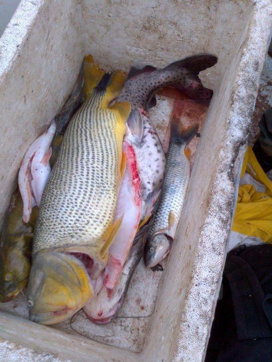 Descomisan más de 300 kilos de pescado de un campamento de paraguayos