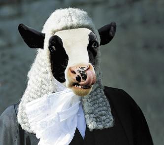 Hacete amigo del Juez