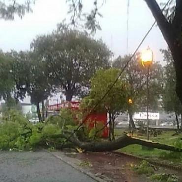 El temporal hizo un verdadero desastre en la ciudad